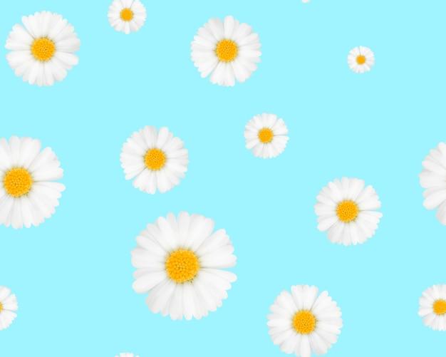 Camomilas em um fundo azul padrões sem emenda
