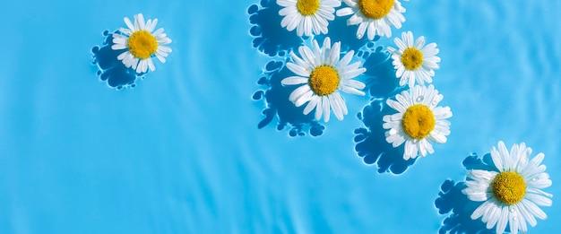Camomilas em um fundo de água azul sob luz natural. vista superior, configuração plana. bandeira.