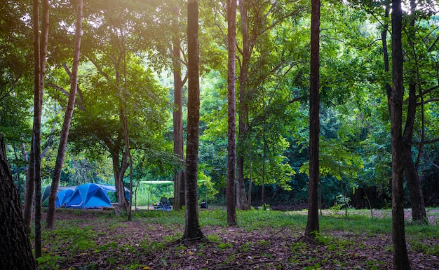 Camping e tenda no parque natural