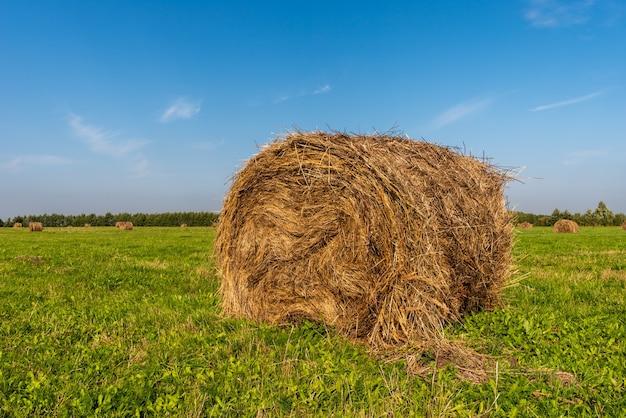 Campo agrícola após a colheita do trigo. um rolo de feno em primeiro plano.