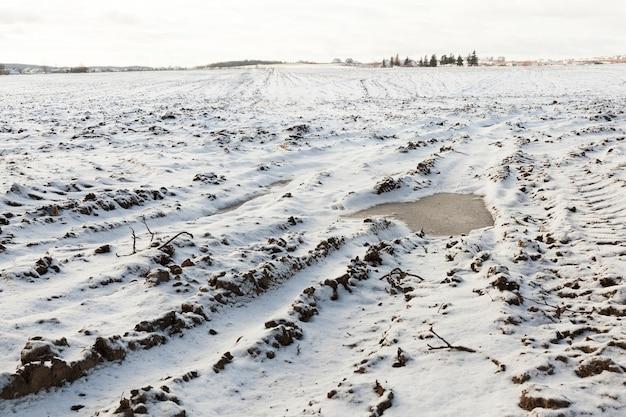 Campo agrícola em uma temporada de inverno. no chão há neve branca depois de uma nevasca. close da foto