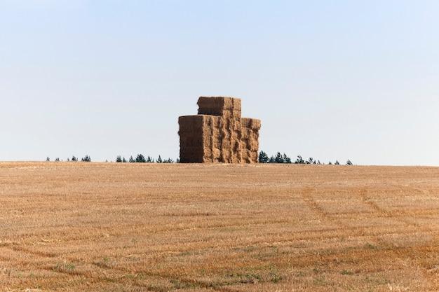 Campo agrícola onde a palha é coletada em palheiros quadrados e dobrada.