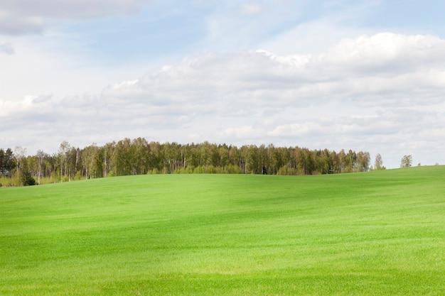 Campo agrícola plantado com grama verde, clima ensolarado na primavera, cores ricas