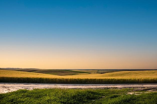 Campo amarelo e belo pôr do sol
