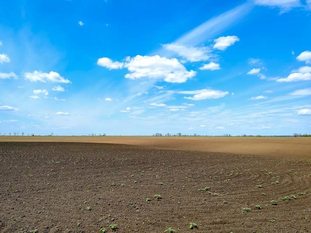 Campo arado com mudas de brotos e céu azul. planta de agricultura crescer. paisagem de terras agrícolas rurais. crescimento alcançando plantas conceituais
