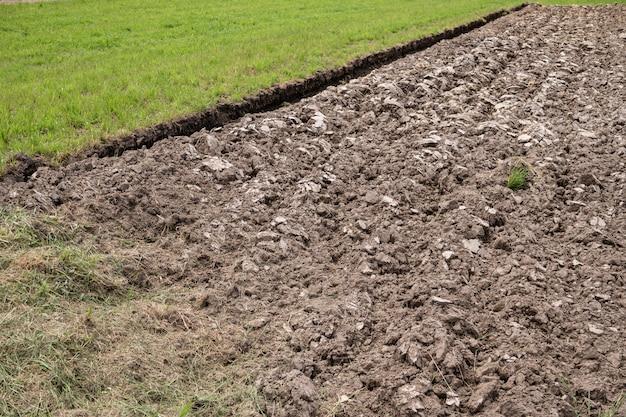 Campo arado e grama verde no início do verão