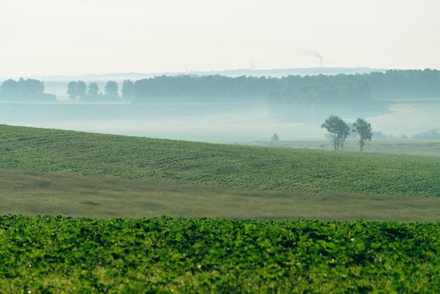 Campo arado enevoado na primavera.