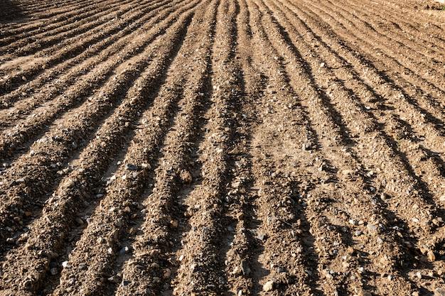 Campo arado no início do verão