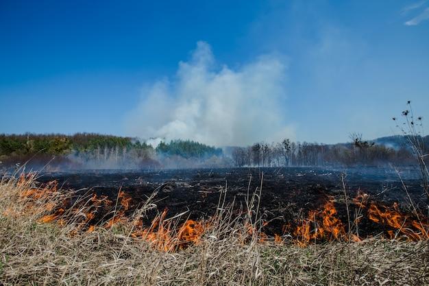 Campo ardente de grama e árvores secas em um incêndio florestal em larga escala