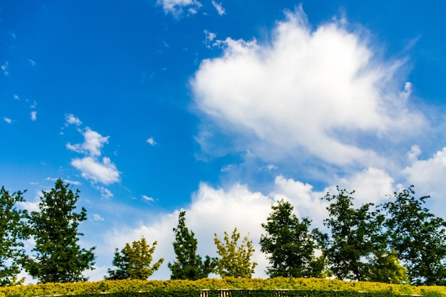 Campo, árvores e céu azul