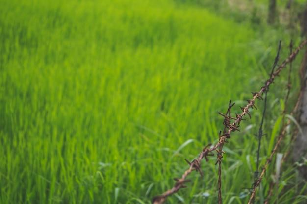Campo cercado com grama verde