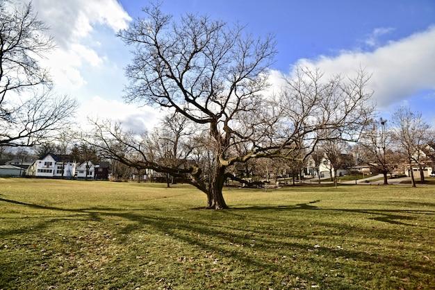 Campo cheio de árvores sem folhas e grama verde durante a primavera