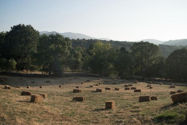 Campo cheio de fardos de palha.