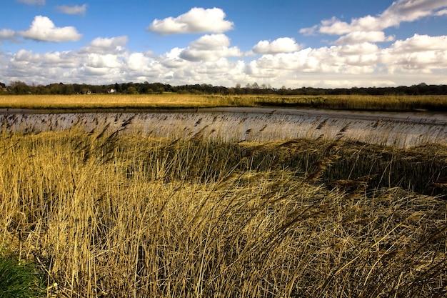 Campo coberto de grama cercado pelo rio alde sob o sol no reino unido