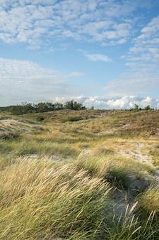 Campo coberto de grama e arbustos sob um céu nublado e luz do sol