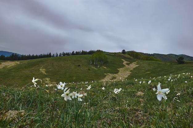 Campo coberto de grama e flores com colinas sob um céu nublado