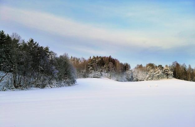 Campo coberto de neve cercado por vegetação sob a luz do sol em larvik, na noruega