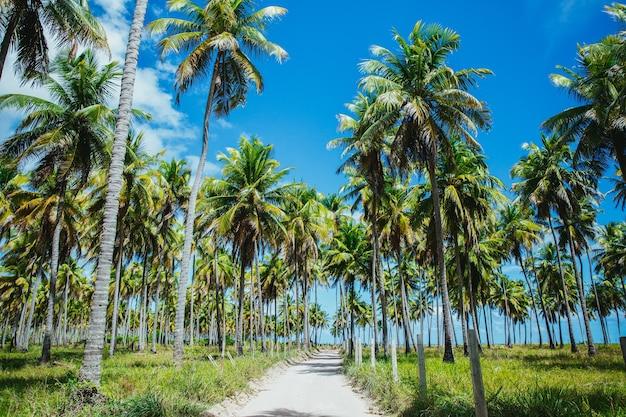 Campo coberto de palmeiras e grama sob a luz do sol e um céu azul