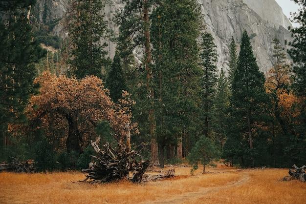 Campo com árvores altas e uma montanha rochosa