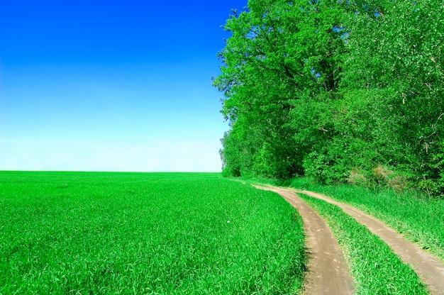 Campo com árvores e caminho de terra