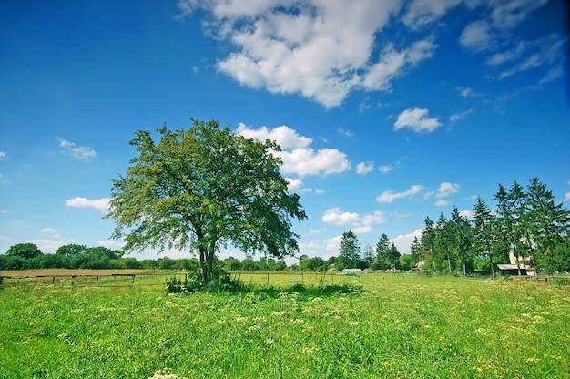 Campo com árvores e grama em um dia ensolarado