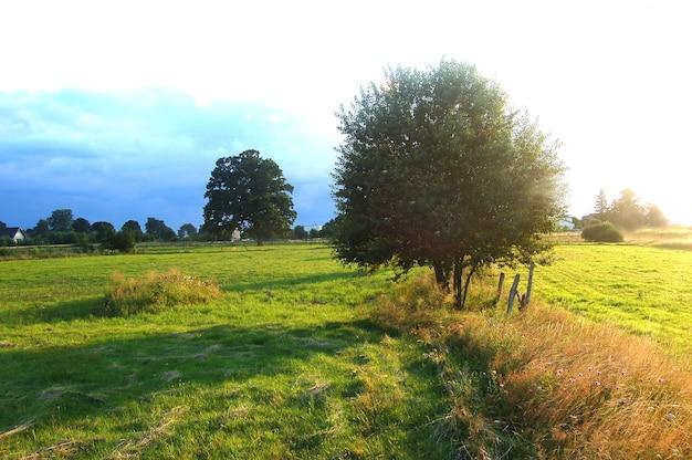 Campo com árvores e grama