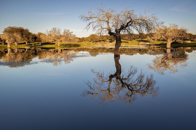 Campo com árvores refletidas em um lago perto de arroyo de la luz, extremadura, espanha