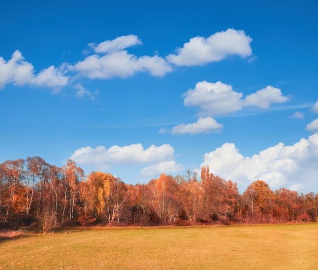 Campo com behiund de floresta de outono