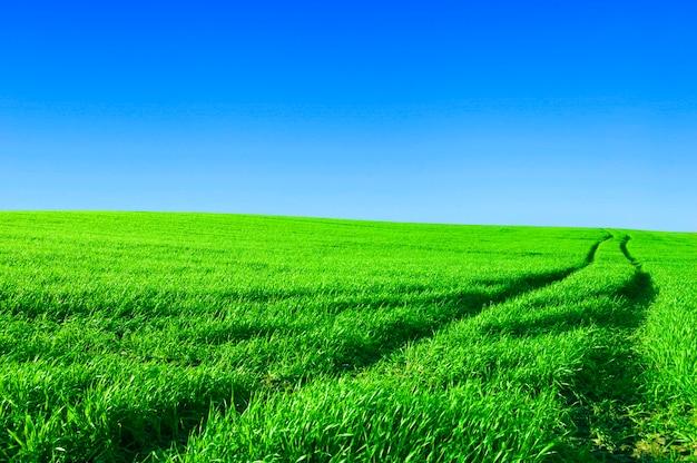 Campo com céu azul