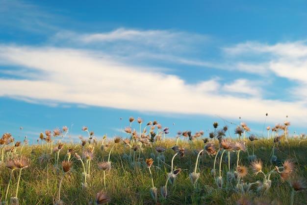 Campo com flores murchas