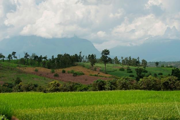 Campo, com, montanhas, em, a, fundo, chiang, dao, chiang mai província, tailandia
