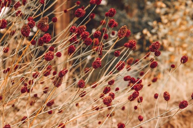 Campo com papel de parede de pequenas flores vermelhas e protetor de tela para sua área de trabalho. Foto Premium