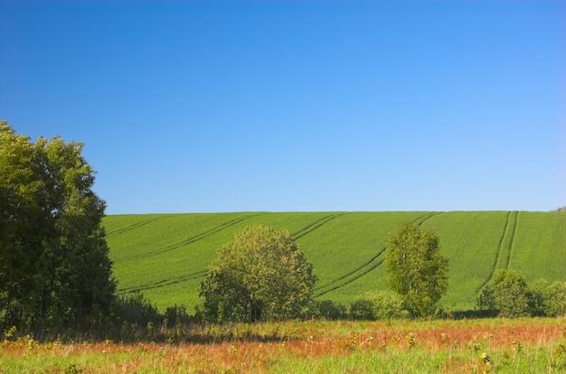 Campo da colheita