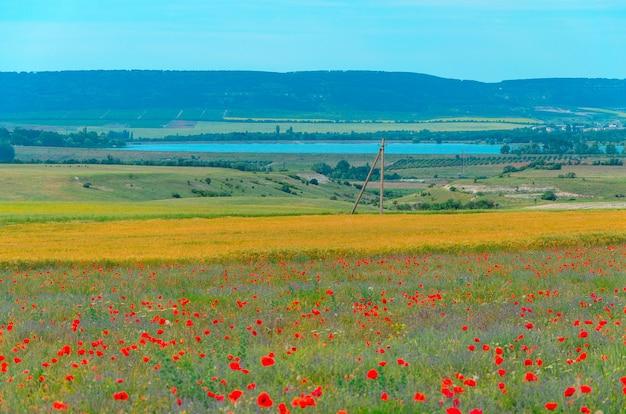 Campo da paisagem da alfazema e papoilas na cidade de bakhchisarai na crimeia.
