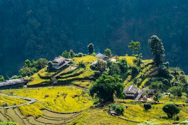 Campo de arroz com casas na colina, área de conservação de annapurna, nepal