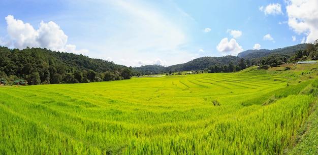 Campo de arroz com terraço verde panorama em mae klang luang, mae chaem, chiang mai, tailândia