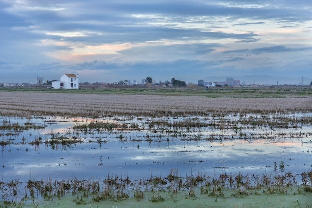 Campo de arroz com uma casa de campo em albufera de valência ao pôr do sol.