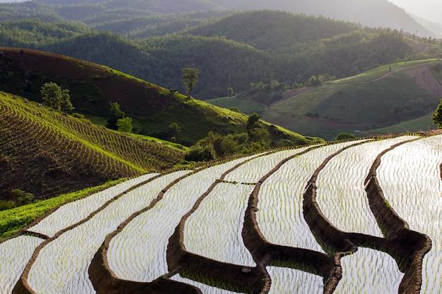 Campo de arroz em socalcos em mae cham chiangmai norte da tailândia