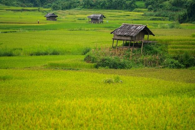Campo de arroz em terraços em mu cang chai, vietnam