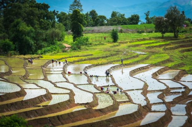 Campo de arroz em terraços na estação da água, chiang mai, tailândia