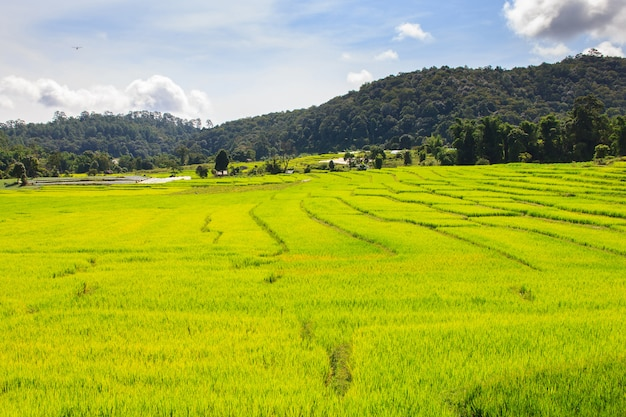Campo de arroz em terraços verdes em mae klang luang, mae chaem, chiang mai, tailândia