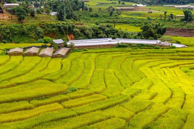 Campo de arroz em terraços verdes em mae la noi, província de maehongson, tailândia