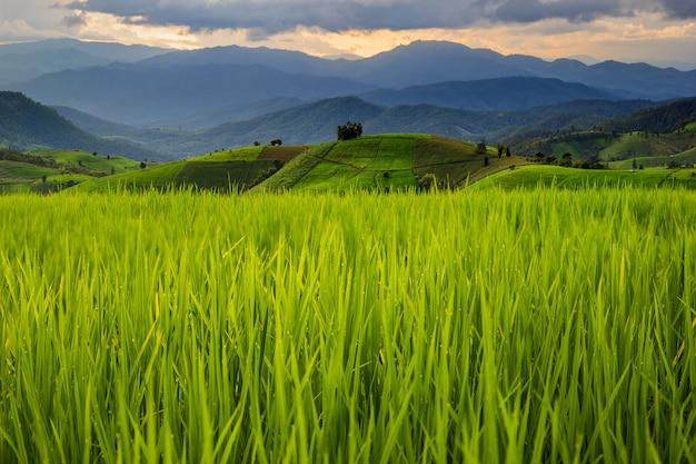 Campo de arroz em terraços verdes em pa pong pieng, mae chaem, chiang mai, tailândia