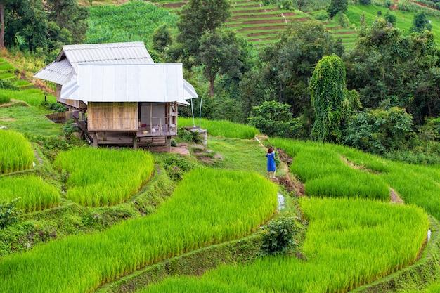 Campo de arroz em terraços verdes em pa pong pieng, província de chiang mai, mae chaem, tailândia
