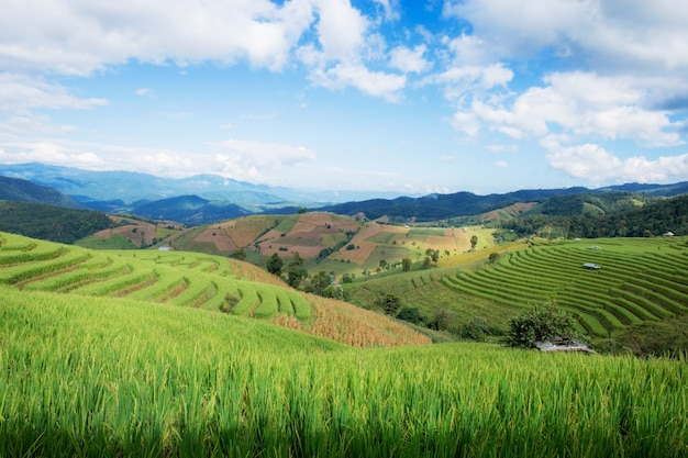 Campo de arroz na montanha na estação das chuvas com a nuvem e o céu azul.