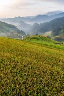 Campo de arroz no terraço verde em mu cang chai, vietnã