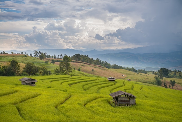 Campo de arroz terraço em chiang mai, tailândia