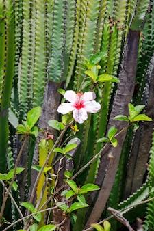 Campo de cactos com flores tropicais. paisagem de cacto.