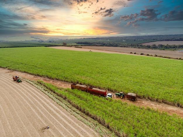 Campo de cana-de-açúcar aéreo no brasil com céu nublado e caminhões na estrada
