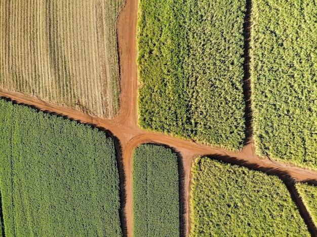 Campo de cana-de-açúcar aéreo no brasil.